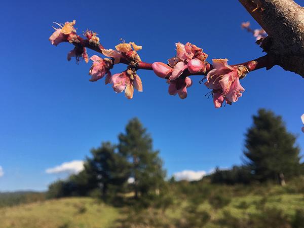 Sila-strata statale 177-ramo-fiori